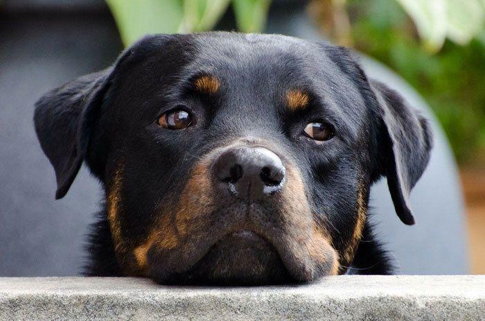 Ook een hond heeft verdriet